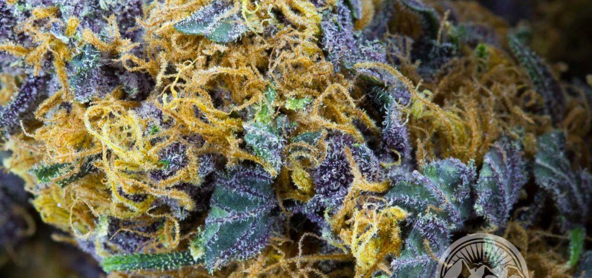 G Code Purple Cannabis Cowichan Grown