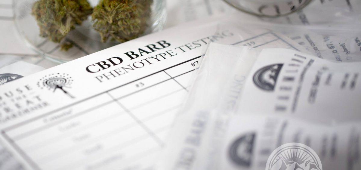 CBD Barb Phenotype Testing
