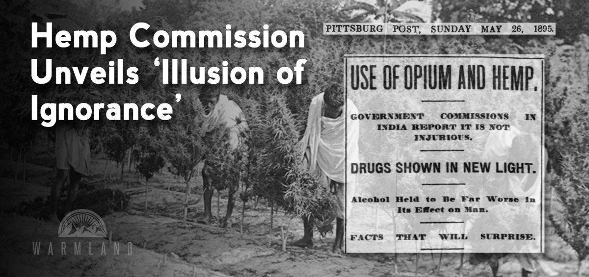 Indian Hemp Commission Unveils 'Illusion of Ignorance'